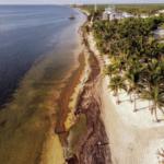 Reportan disminución drástica del sargazo en playas de Quintana Roo